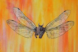 AZUREVA rabbitfly