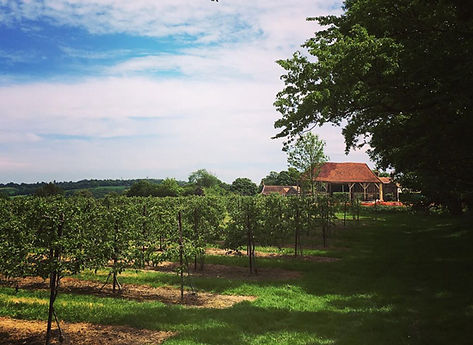 cherry-barn-vineyard.jpg
