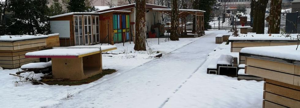 Eclos neige 1.JPG