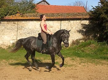 Travail du cheval