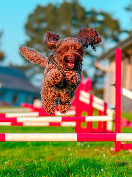 Dogs Actfully AV -17 CROPPED.jpg