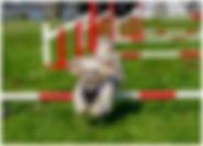 agility1.jpg