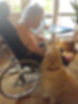 chien visiteur .jpg