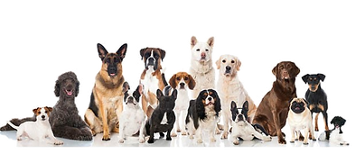 chiens_transparent1.png