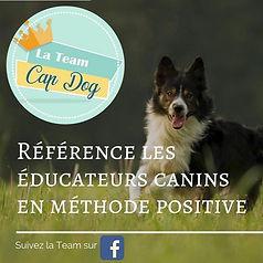 team cap dog.jpg