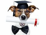 _light-170-diplomes-titres-et-certificat