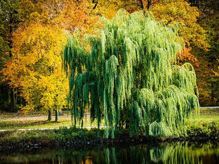 Celtic Tree Wisdom.The Willow Tree : Saille
