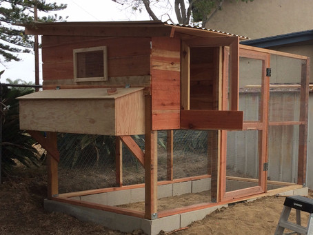 Chicken Coops - Should You DIY? We Can Help!