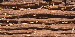 termite_edited.jpg