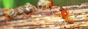 main_termite-control-banner.jpg