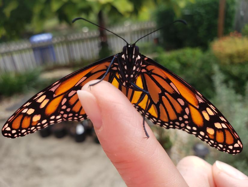 The Importance of Pollinators