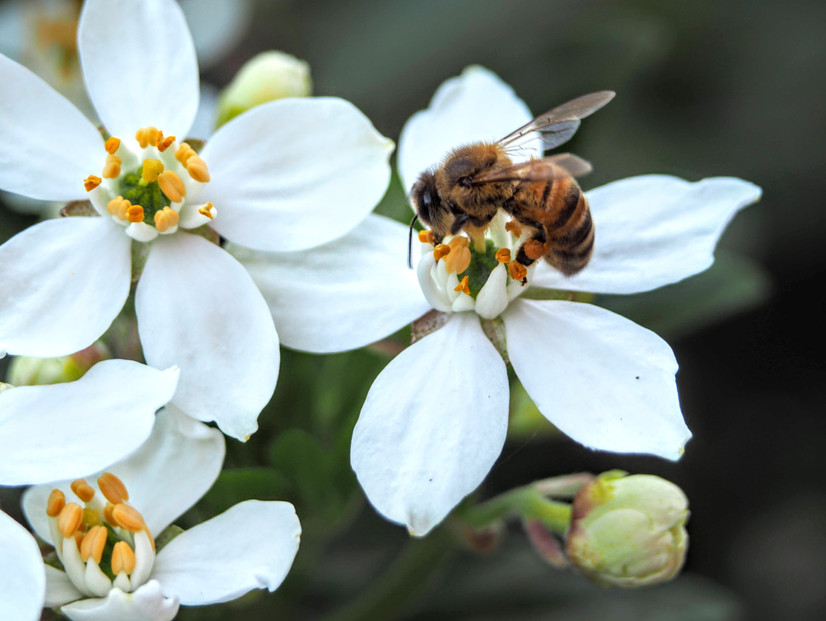 Creating your own Pollinator's Place