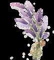 kisspng-lavender-drawing-lavender-5a6b52