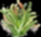 kisspng-cactaceae-watercolor-painting-wa