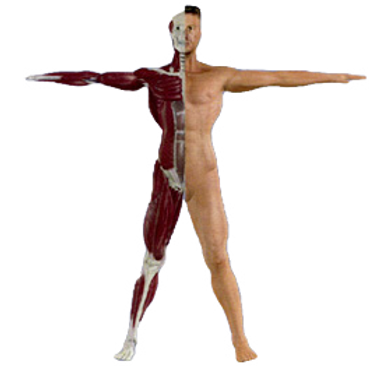 BODY_edited.png