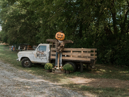 2018 Fall Pumpkin Patch Minis at The Wilson Family Farm