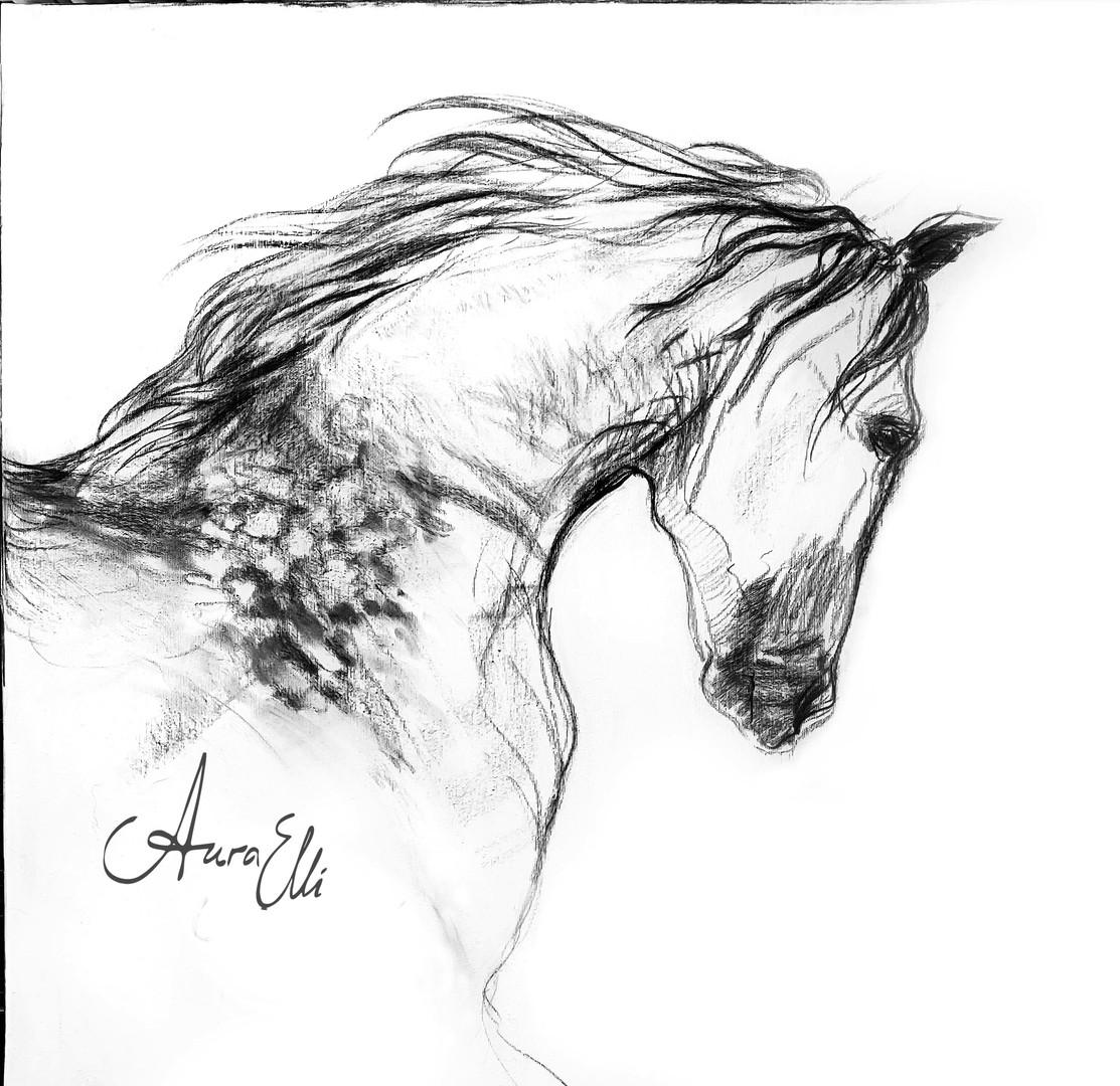 horsecharcoal1sharf.jpg