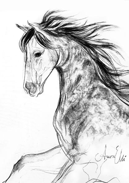 horseheadcharcoal.jpg