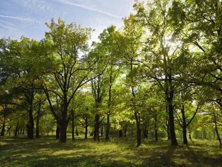 В России введут единый стандарт и госплан для лесоустройства