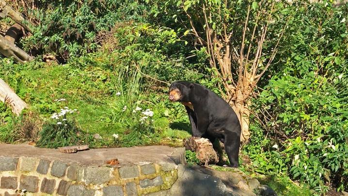 Edinburgh Zoo Black Bears Scotland.jpg