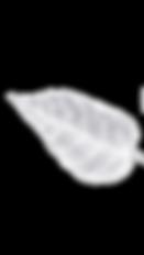 Leaf_NoBack_White.png