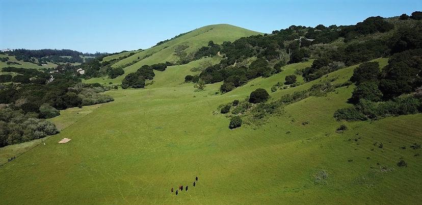 Rocks-Ranch-Meadow-Apr-2020.JPG