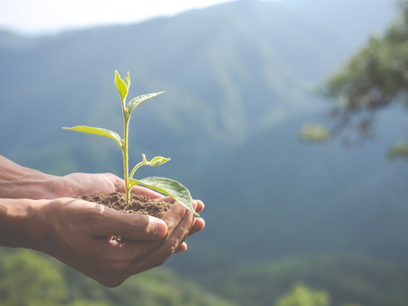 Dicas de sustentabilidade em casa, mesmo em tempos de crise