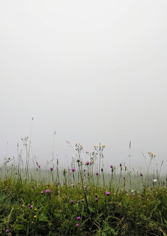 Flowers in the sky, Switzerland