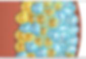 Coolsculpting Italia Toscana Viareggio Forte dei Marmi Pisa Lucca Firenze del Dott. Emilio Betti Chirurgo Estetico e Dermatologo Direttore di DermoEstetica Italiana