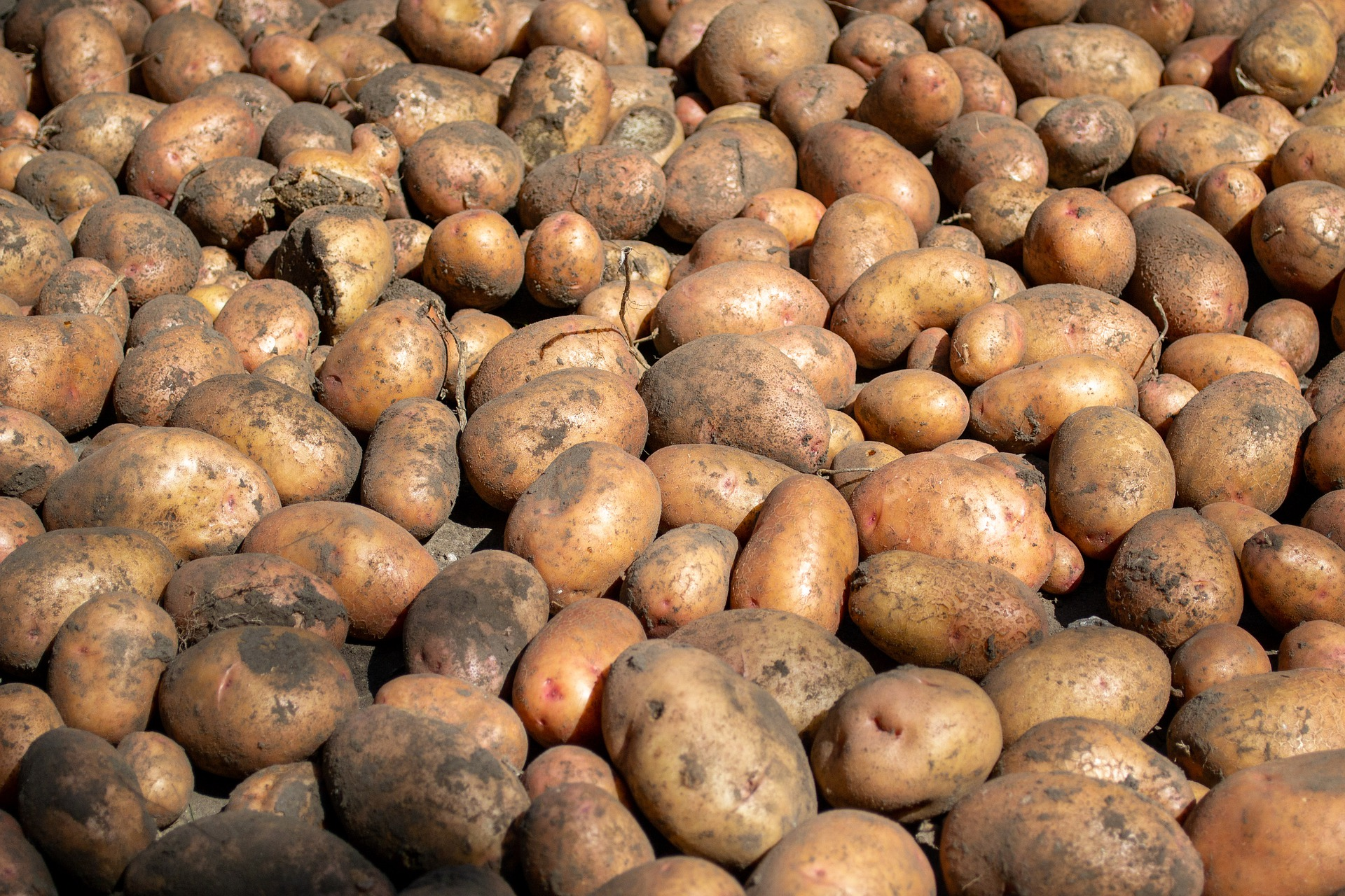 potatoes-5528924_1920