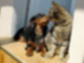 Brand Doxie and Cat.jpg