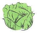 Head_lettuce_edited.jpg