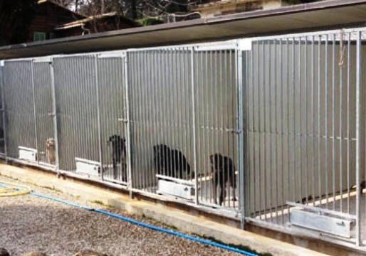 Les refuges pour animaux SPA