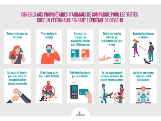 COVID19 : conseils aux propriétaires  lors de leur consultation à la clinique vétérinaire