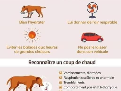 Alerte canicule  : risque de coups de chaleur pour nos chiens  et de brûlures des coussinets