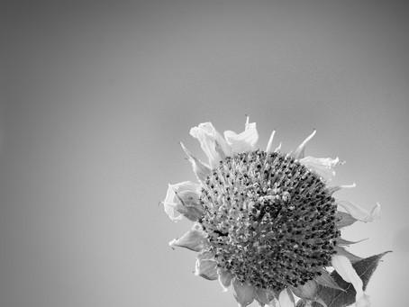 Flower.  Photograph
