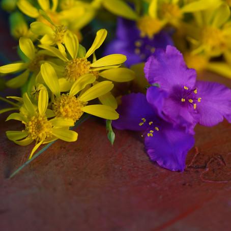 Wildflowers days of isolation
