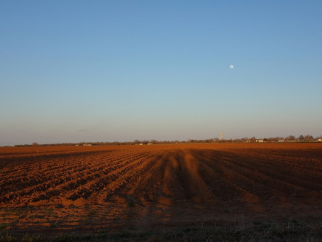 Moonrise and field