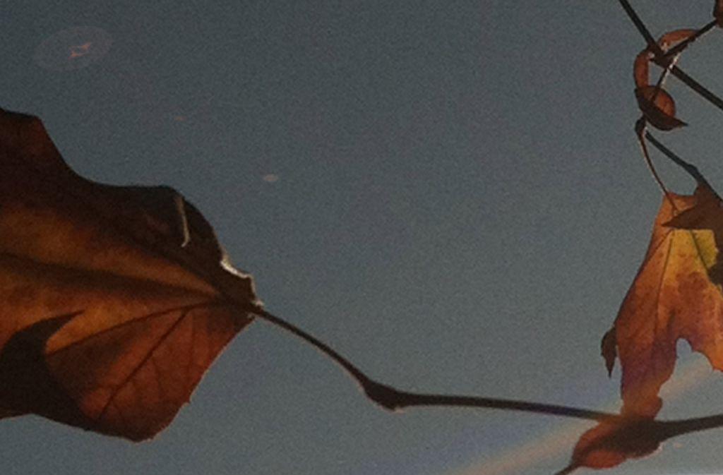 01_leaves in tree1 web.jpg