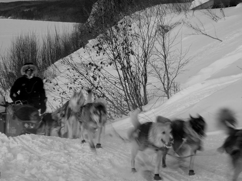 Le premier musher arrivant à Ruby.