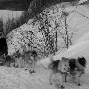 Iditarod, des traîneaux dans la taïga