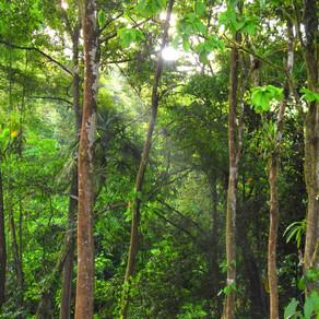 L'or véritable du Costa Rica