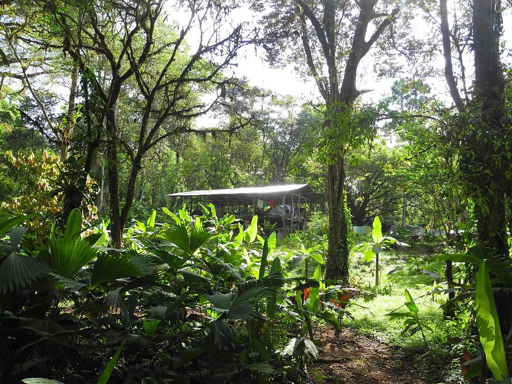 La plateforme dans la forêt vierge.