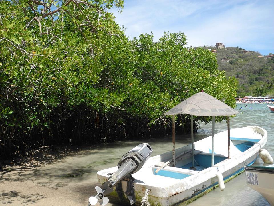 Quelques palétuviers forment une mangrove timide mais salvatrice pour l'eau et la faune de la baie.