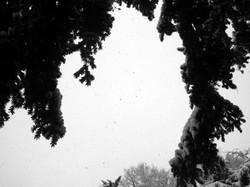 Chut de neige