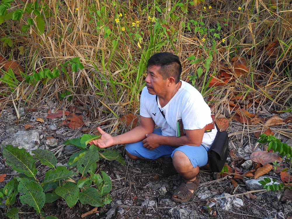 Don Damian nous parle des plantes de sa jungle qu'il aime tant.