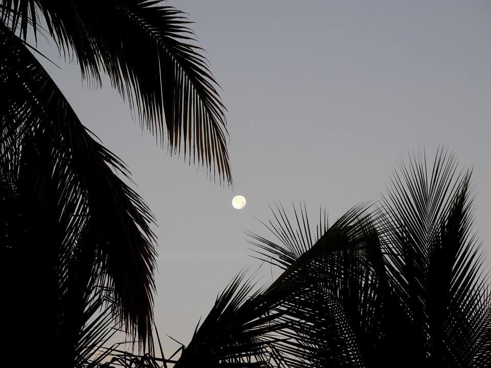 Lune et palmiers dans la torpeur tropicale.