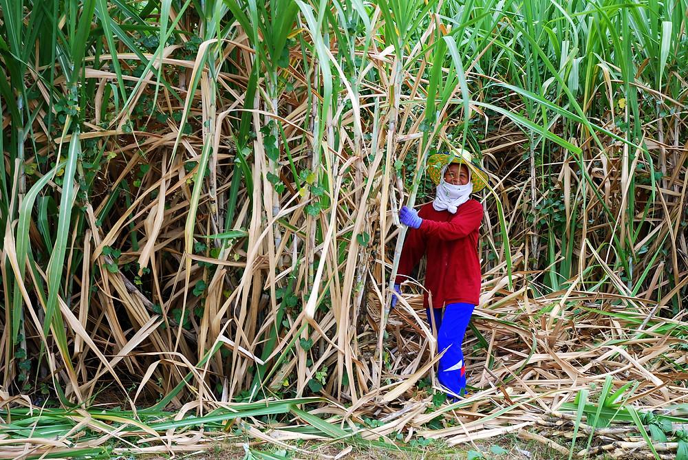 Le long d'une route cahoteuse entre forêt d'évéas et champs de cannes à sucre : un sourire.