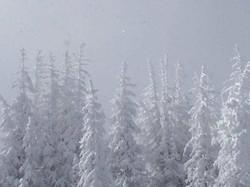 Winter on Winter