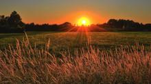 Adesão ao Programa de Regularização Tributária Rural é prorrogado